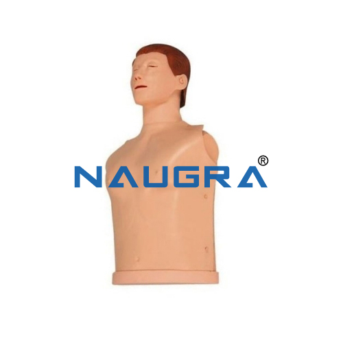 Half Body CPR Training Model Male