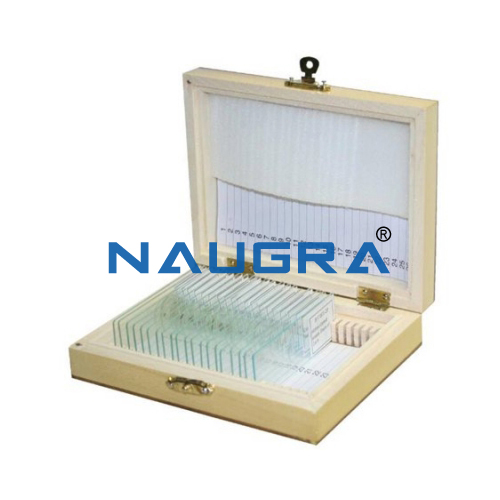 Biology Lab Textile Fibre Prepared Slide Set
