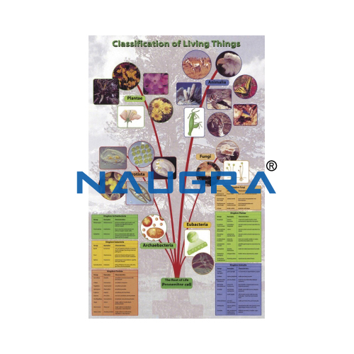 Biology Lab Classification of Living Things Poster