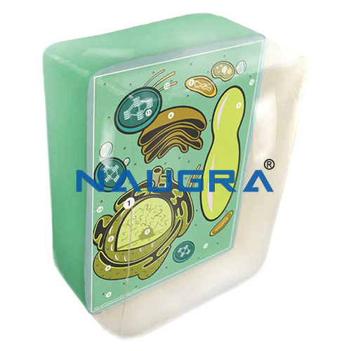 Biology Lab Inflatable Plant Cell Model