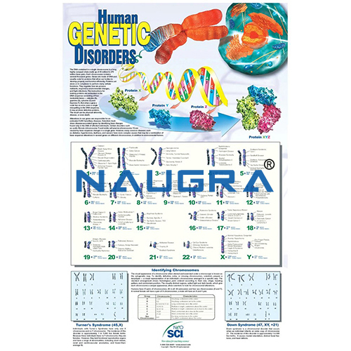 Biology Lab Human Genetic Disorders Poster