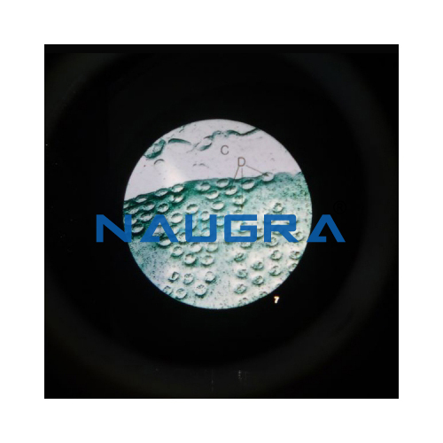 Biology Lab Microslide the Cell Nucleus