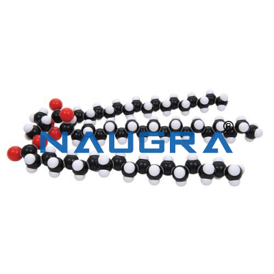 Fat Glyceryl Tristearate Molecular Model Kit