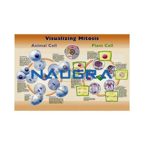 Biology Lab Visualizing Blood Poster