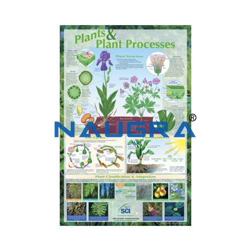 Biology Lab Plants and Plant Processes Poster