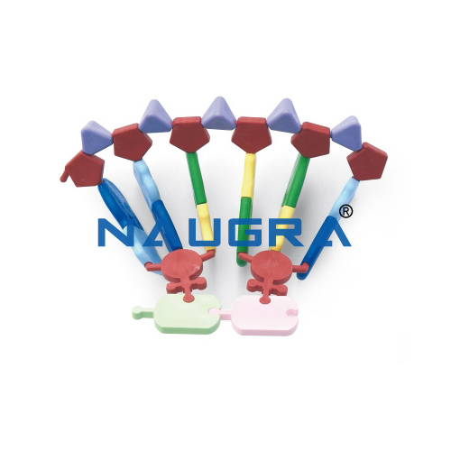 Biology Lab RNA 12 base Molecular Model